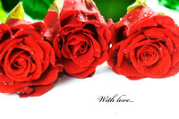 Red fresh roses on white
