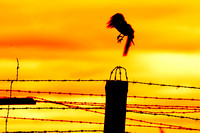 Bird flying off from prison fence