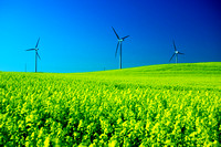 Environment (green energy, ecology, save Earth concepts)