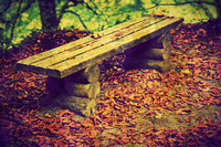 Old bench in autumn forest.