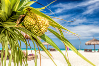 Coconut palm on the beach in Maldives, Indian Ocean