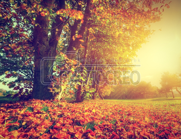 Autumnal Equinox 2018 First Day of Fall  Date Time