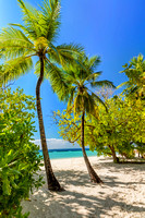 Tropical island with coconut palm trees on sandy beach in Maldiv